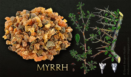 myrrh-resin-plant