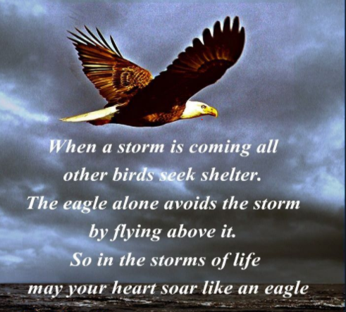 eagle soar above the storms