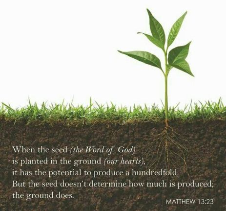 Soil Matthew 13 Good Soil