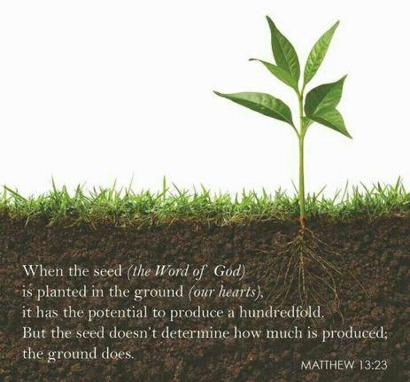 Soil Matthew 13 Good Soil
