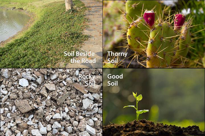 Soil the four types the-four-soils-600x400