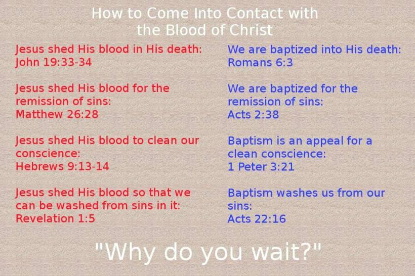 Image result for jesus blood images